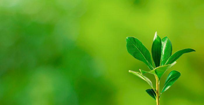 Treze teses sobre a catástrofe ecológica iminente