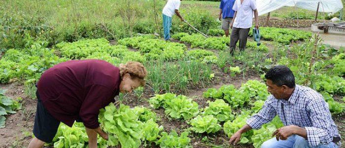 """""""Agroecologia potencializa outros direitos humanos"""", afirma pesquisador"""