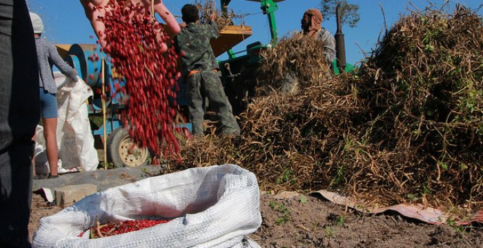 O golpe ruralista e o preço do feijão