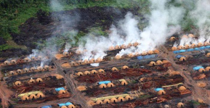 Ruralistas oferecem mercado de terras sem fronteiras e com muita grilagem ao capital estrangeiro