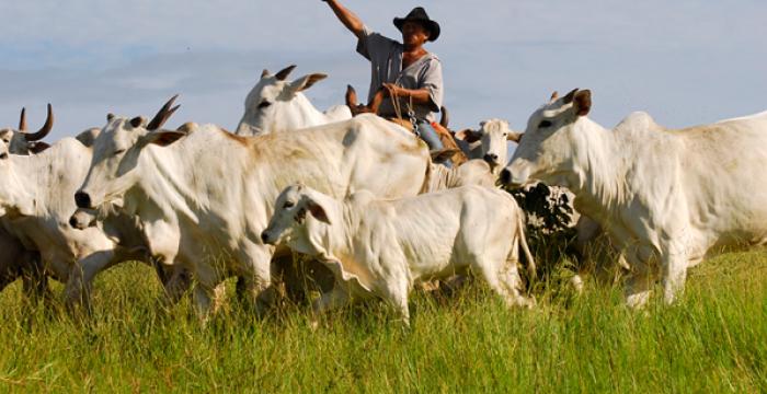 Apenas 36% dos empregados do agronegócio têm carteira assinada