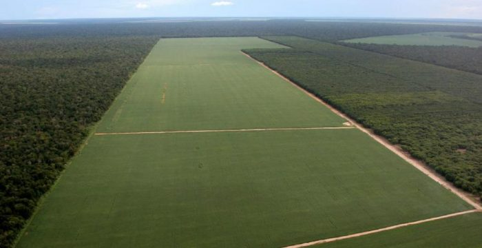 Brasil perde florestas para a soja, mostra IBGE