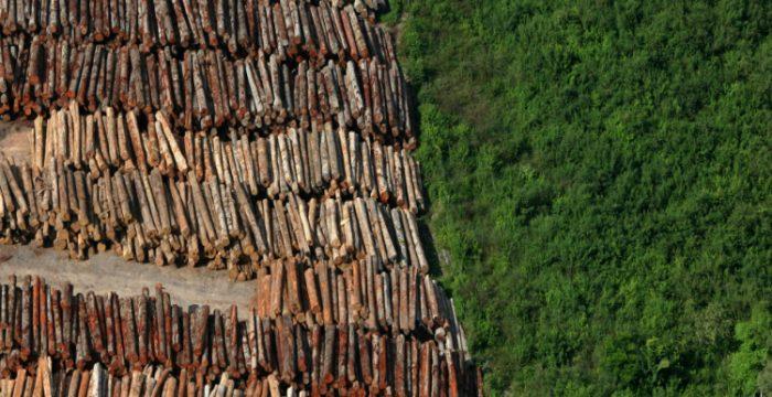 O Brasil é um país bovino. O Estado brasileiro sinaliza que apoia o desmatamento, apesar de políticas setoriais de controle