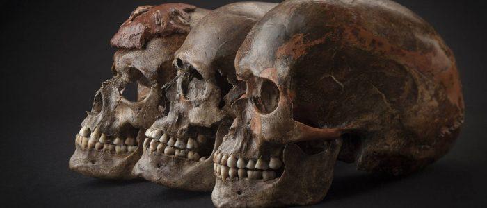 Neandertais eram espertos e já faziam artesanato com osso de corvo