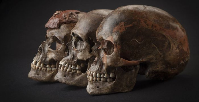 As vantagens evolutivas de termos feito sexo com os neandertais