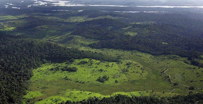 Populações pré-colombianas podem ter domesticado a Amazônia