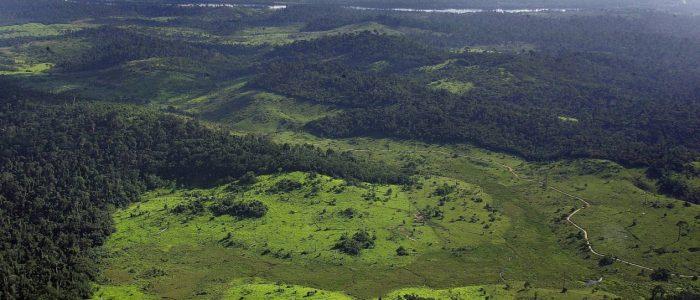O mundo desconhecido das Savanas Amazônicas