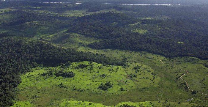 Amazônia: Lágrimas de crocodilo não apagam fogo