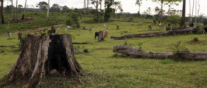 Excessos ruralistas