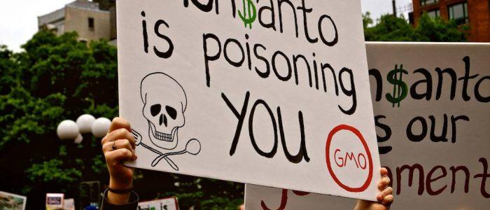 Le Monde denuncia práticas irregulares da Monsanto