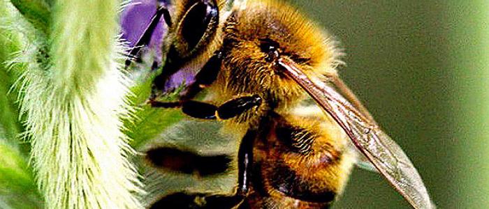 Em 90% do Brasil, mudanças no clima reduzirão abelhas e afetarão alimentos