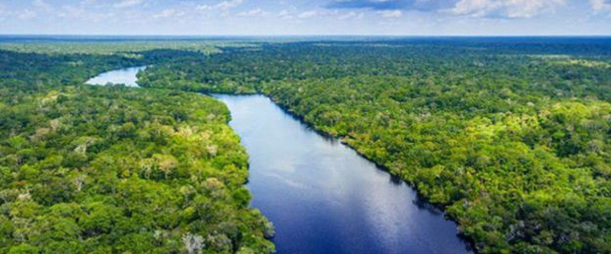 Seres humanos alteram florestas há 45 mil anos, mostra estudo