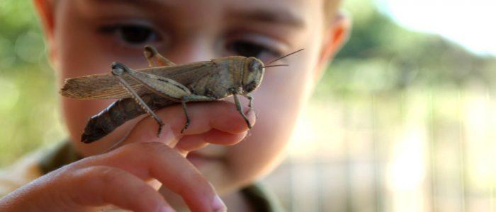 Adeus aos insetos da sua infância