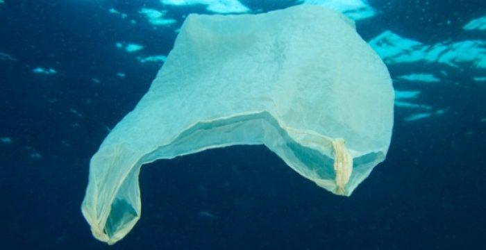 Os oceanos estão ficando sem oxigênio, e a culpa é nossa