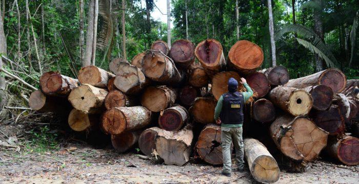 41% da exploração de madeira em MT é ilegal, diz estudo