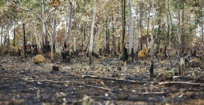 Estudo indica que, uma vez degradado, o Cerrado não se regenera naturalmente