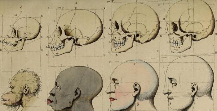 "Racismo ""científico"" (origens das teses racistas na modernidade)"