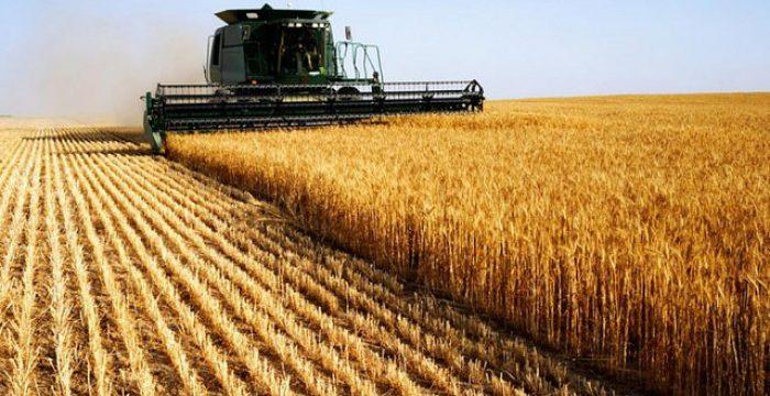 Só 87 empresas controlam a cadeia produtiva do agronegócio