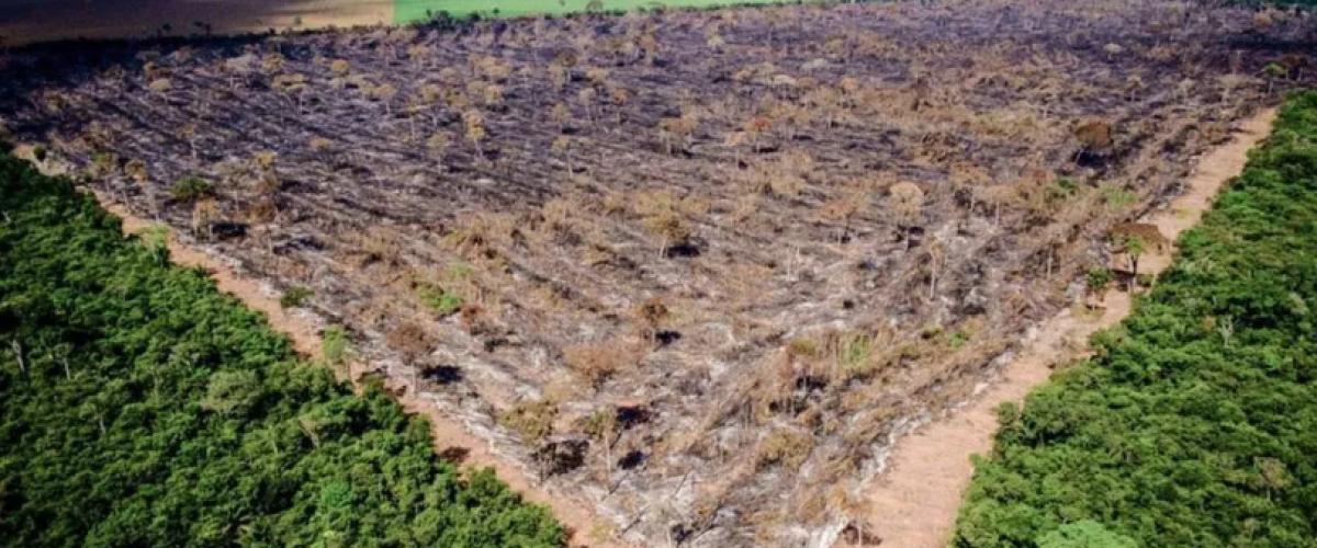 Desmatamento na Amazônia dispara e cresce 60% sob Bolsonaro