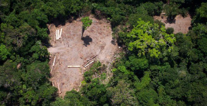 Desmatamento na Amazônia aumentou 45% em 2019, apontam alertas