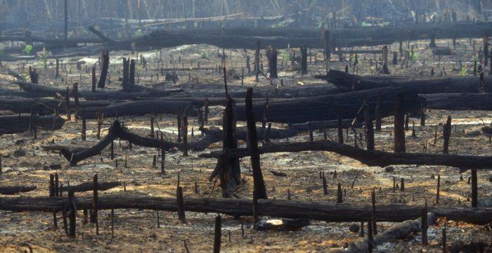 Para entender a crise ambiental brasileira